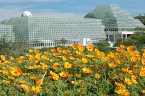Biosphere-2-with-wildflowers-4-300×198